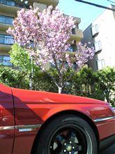 164と桜
