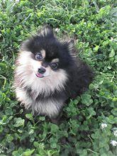 意味なし愛犬の写真