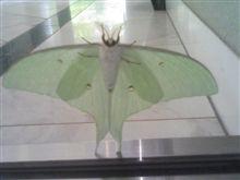薄緑色の生き物。