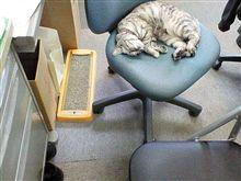 ちょ~w 俺の椅子がぁ・・・。