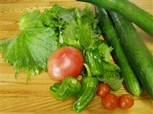 朝採れ野菜~♪