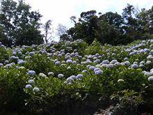 麻綿原に紫陽花を見に行きました。