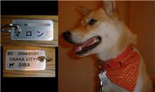 愛犬のネームプレートを自作しました。