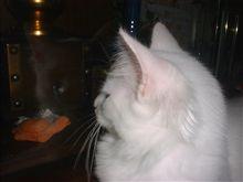 またネコかい って言わないで。だって、ついつい手が勝手にこのこたちをアップしてしまう・・・。もう、止まりませんよこねこ写真まっしぐら。