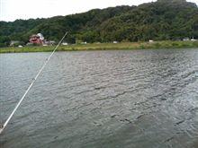 今日の芦田川