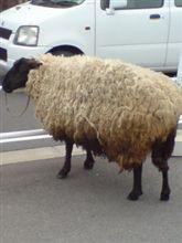 幸運の羊:-)