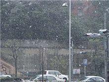 東京で見る雪はこれが…