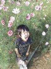 秋の花゚・*:.。. .。.:*・゜