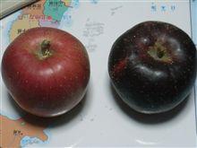 りんごが届いた