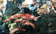 英彦山 紅葉