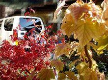 まだ秋・・・当選の秋♪