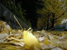 つらい とき‥‥④ 落ち葉の道