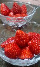 イチゴ…苺