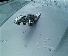 洗車してる…