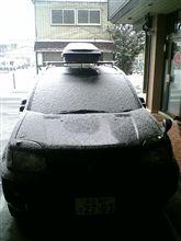 や~!♪雪が降ってきたよ~!