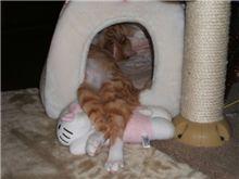 キティさん大好き(2)