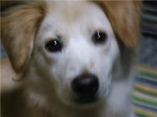 愛犬「ナナ」