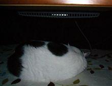 猫はコタツで丸くなる!♪