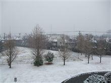 東京でも雪