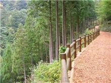 都民の森で散歩