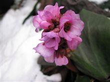 花の写真 50