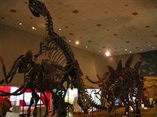 『大阪市立自然史博物館』