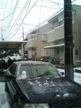 ♪雪だぁ♪