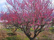 『春の足音・・・』