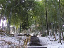 丘の竹林の雪景色