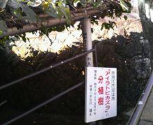 日本にあるのは唯一ここだけです