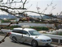 春だ!桜だ!オフ日和だ~!!
