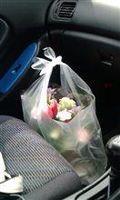 セリカにお花が