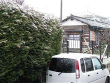 朝 雪降ってます。