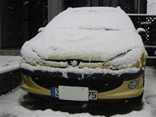 朝、起きてみると思いがけない積雪・・・!