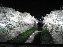 もいっちょ、夜桜ショット