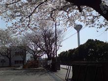 葉桜が・・・。