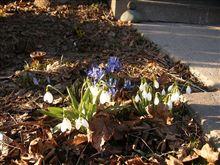 ちいさい春