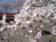桜の咲く季節に・・・