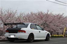 今年の桜 まとめ