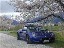 満開の桜の木の下で。
