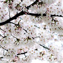 春なので♪