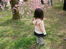 京都に行く!春