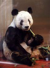 上野動物園のパンダ、リンリンの死亡。