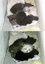 子猫ちゃんたち