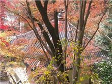 高取城・談山神社・長谷寺の紅葉をおすすめスポットとフォトギャラリーに追加しました。