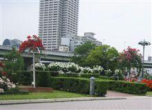 中ノ島公園のバラ