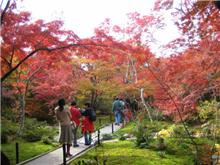 京都の紅葉見てきました。