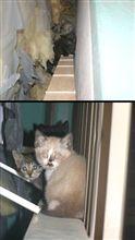 帰ってきた子猫ちゃん