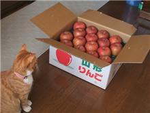 リンゴの色気
