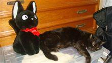 黒猫と!?